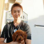 プードルレッド子犬 男の子嬉しいお迎え